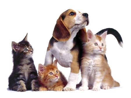 отель для собак и кошек