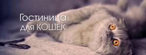 slide_2_hotel_cats